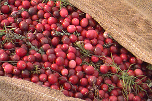 Dry Harvest of Cranberries -acrn2ff.htm